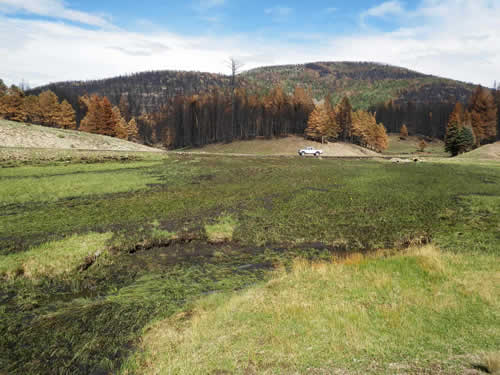 Fire Restoration by Keystone Restoration Ecology